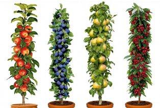 Set di 4 alberi da frutto