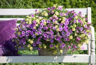 Plantes estivales