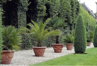 3 palmiers d'extérieur