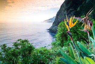 Madeira (7 n.), incl. vluchten