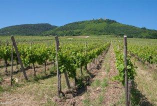 Erkunden Sie die Elsässischen Weinstraße