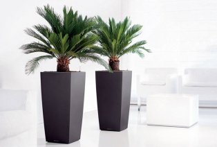 Set de 2 palmiers fougères d'intérieur