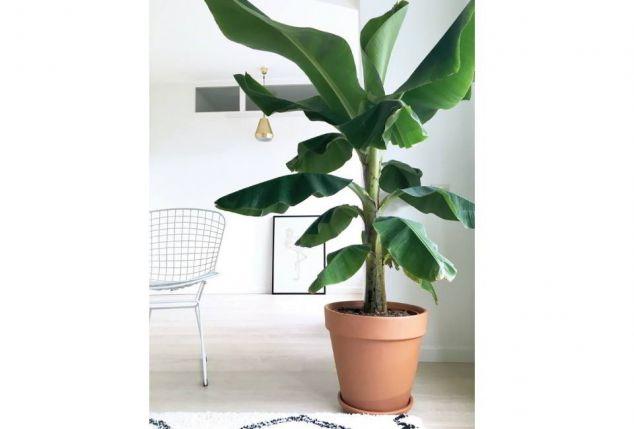 plante exotique sous lampe