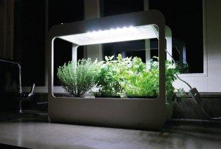 Mini LED-Gemüsegarten