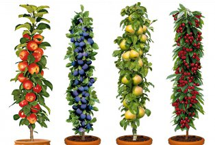 Conjunto de 4 árboles frutales