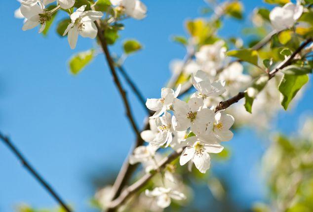 Appelbomen online dating
