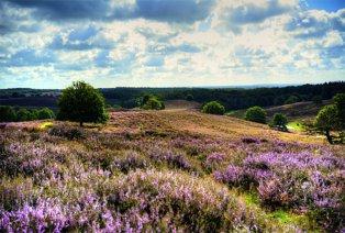 4-Sterne-Aufenthalt in den Wäldern der Veluwe
