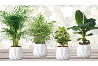 Set of four houseplants