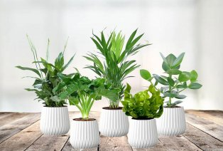Set of 5 houseplants